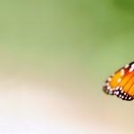 Butterflies funny