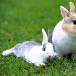 Rabbit new wallpapers