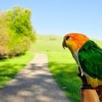 Parrot hd photos