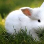 Bunnies hd photos