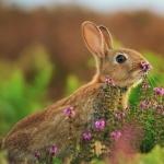 Bunnies new wallpapers