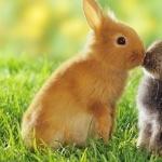 Bunnies photo