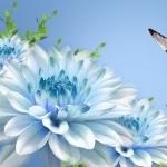 Butterflies images