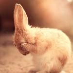 Bunnies free