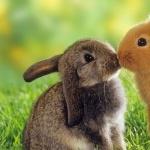 Bunnies wallpapers for desktop