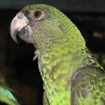 Jardine Parrot desktop