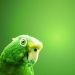 Parakeet new photos