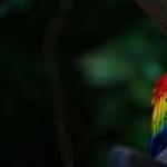 Scarlett Macaw funny