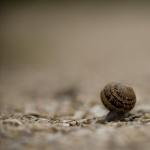 Sea Snail free download