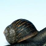 Snail photo