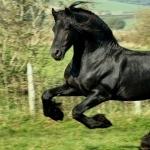American Quarter Horse new photos