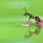 Ants hd
