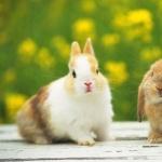 Bunnies funny