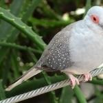 Diamond Dove 1080p