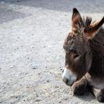 Donkey full hd