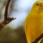 Parakeet download wallpaper