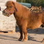 Pony high definition photo
