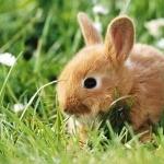 Rabbit new wallpaper