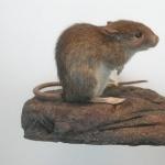 Rat hd photos