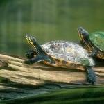 Tortoise pics