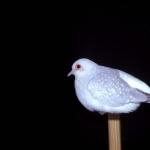 Diamond Dove background