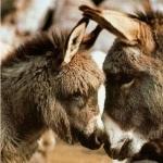 Donkey pics