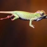 Green Iguana new photos