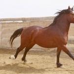 Mustang pics
