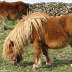 Pony photos