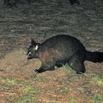 Possum 1080p