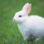 Rabbit full hd