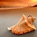 Sea Snail 2016