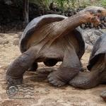 Tortoise cute