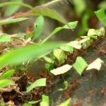 Ants cute