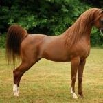 Arabian 1080p