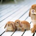 Bunnies download