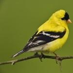 Finch new photos