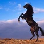 Horse 1080p