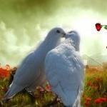 Lovebird photos