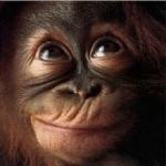 Monkey hd wallpaper