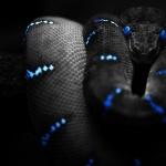 Snake hd pics