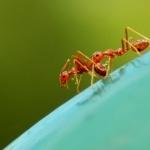 Ants photos