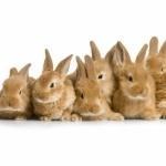 Bunnies 1080p