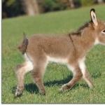 Donkey hd pics