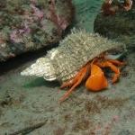 Hermit Crab photo
