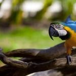 Parrot download wallpaper