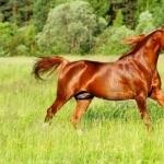 Quarter Horse 1080p