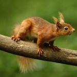 Squirrel desktop