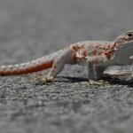 Lizard cute
