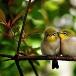 Lovebird image